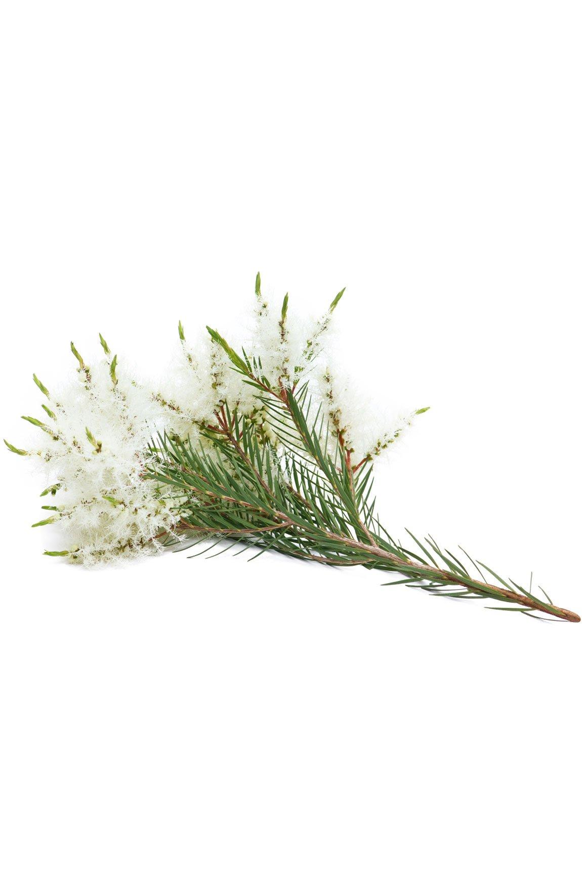 doTERRA Melaleuca Touch - Melaleuca alternifolia - Roll-On - 10ml